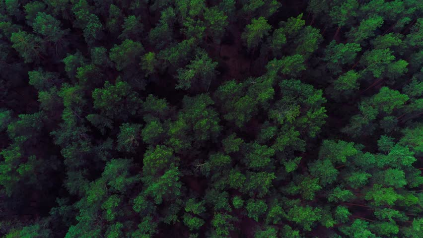 Aerial fly over a beautiful green forest | Shutterstock HD Video #1013486207