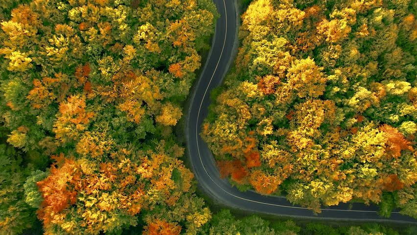 4K aerial flight above winding road cutting through thick deciduous forest in bright autumn colors