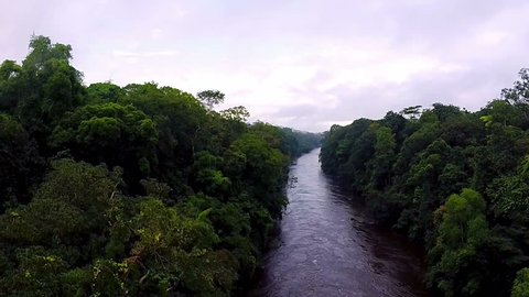 River in the rain-forest. Camera moving down to the river. Equatorial Guinea jungle.