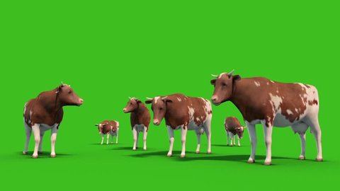 Herd of Cows Farm Animals Front Green Screen 3D Rendering Animation