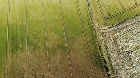 Aerial shot over wheat fields in Wiltshire, UK.