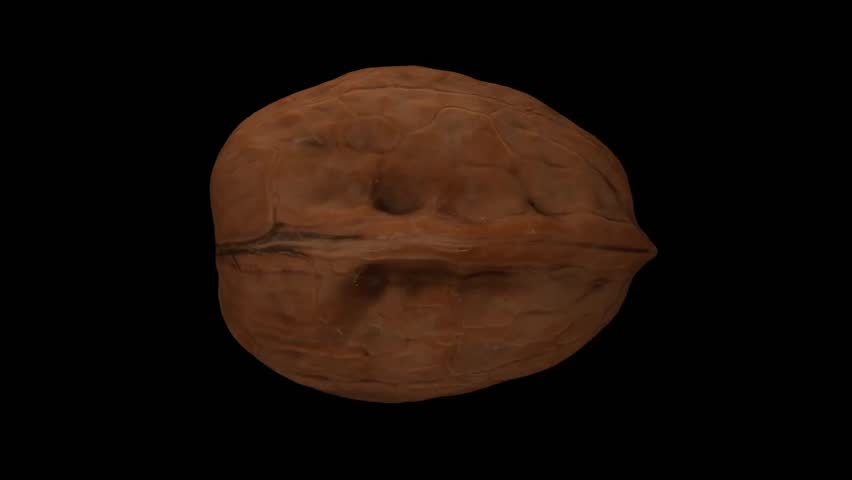 Realistic render of a rotating walnut on black background. The video is seamlessly looping, and the object is 3D scanned from a real walnut.