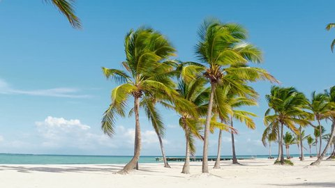 Dominican republic beaches, island beach, The best beaches in the world  / Beautiful palm trees on the shore of the blue sea. Atlantic Ocean, the beaches of Punta Cana.