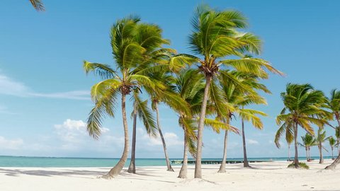 Dominican republic beaches, island beach, The best beaches in the world  / Beautiful palm trees on the shore of the blue sea. Atlantic Ocean, the beaches of Punta Cana. Caribbean turquoise sea water