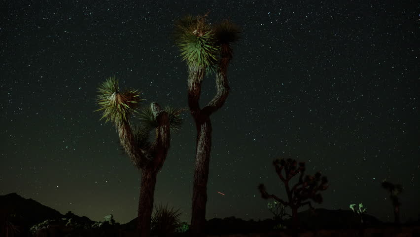 Joshua Tree National Park is an American national park in southeastern California, east of Los Angeles, near Palm Springs.