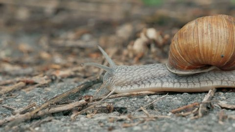 fast Snail is crossing the street. acceleration in 10 times