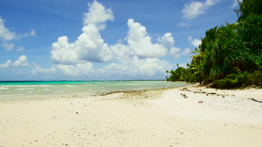Travel, seascape and nature concept - tropical beach with palm trees in french polynesia | Shutterstock HD Video #1014247967
