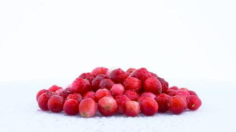 Several lingonberries rotating on the on the turntable isolated on the white background. Close up. Macro. Water drops.