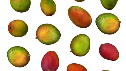 Realistic render of falling sindhoora mangoes on white background. The video is seamlessly looping, and the objects are 3D scanned from real mangoes.