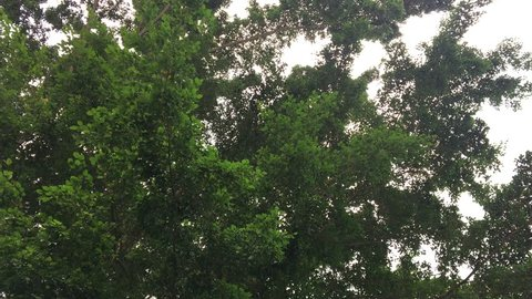 A sky showing leaves on the tree.
