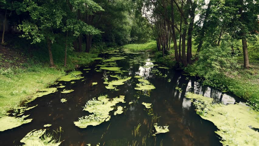 Summer green forest with duckweed river landscape, beautiful rural summer nature