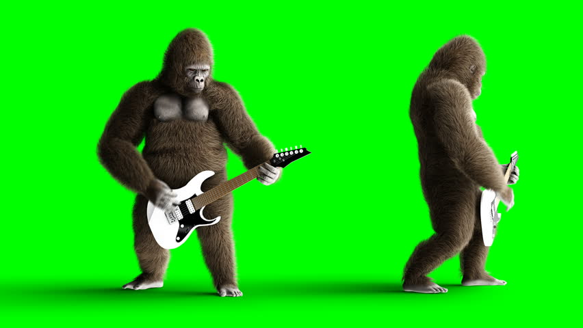 Funny brown gorilla play the electric guitar. Super realistic fur and hair. Green screen 4K animation.
