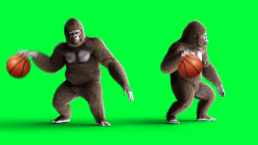 Funny brown gorilla play basketball. Super realistic fur and hair. Green screen 4K animation.