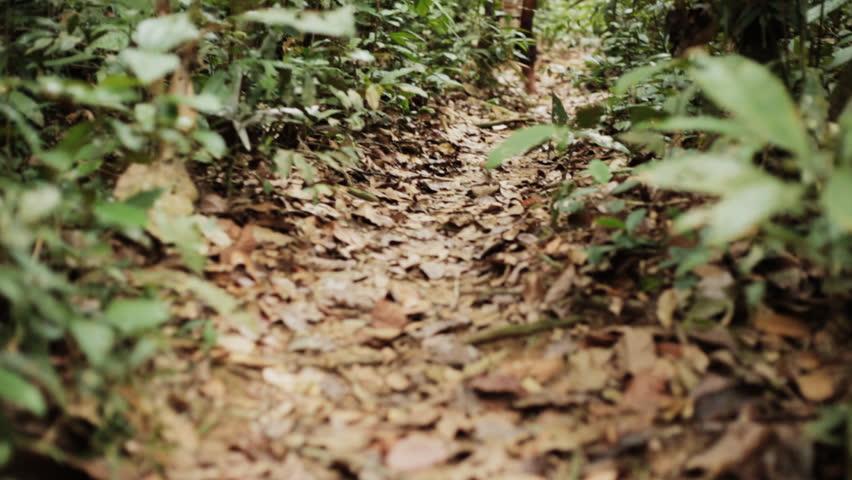 Brazilian Indian Walking in the Forest. Índio brasileiro andando na floresta.