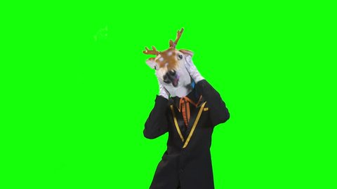 dancing Animal   on green screen