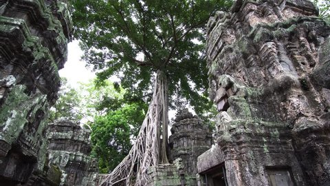 One of the most famous temples in Angkor, the Ta Prohm is known for the huge trees and the massive roots growing out of its walls