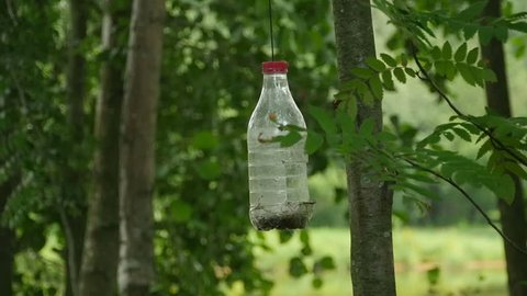 Titmouse in a homemade bird feeders slow motion