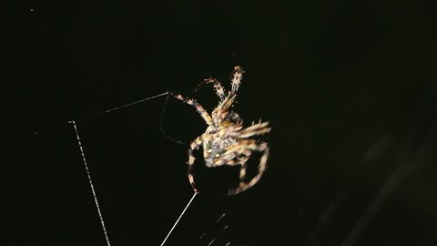 Big spider making a web at night. Spider on a web