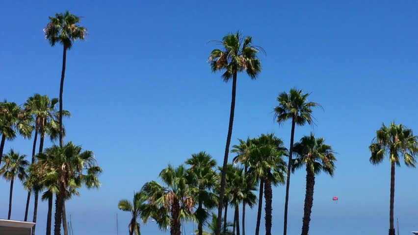 Palm trees blowing against a clear blue sky with copy space | Shutterstock HD Video #1015524637