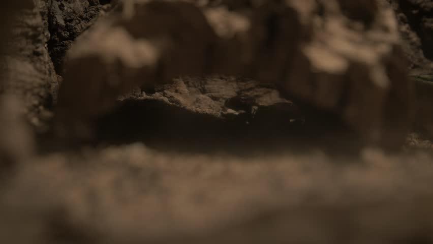 Scorpio hidden under a brown piece of wood