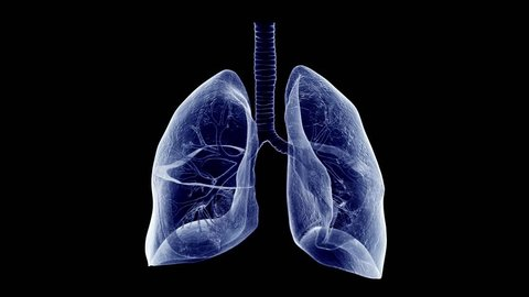 3d rendered medically accurate animation of the human lung