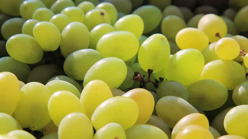 summer autumn sweet grapes harvest