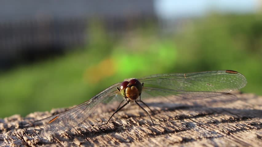 Dragonfly washes his face