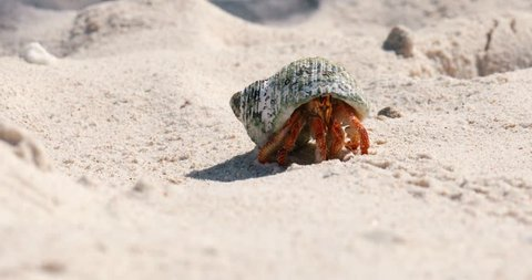 hermit crab in close-up