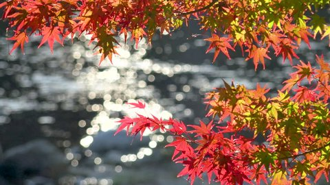 It is the famous Japanese famous autumn leaves. This is Autumn Foliage at Kourankei. in Aichi Prefecture Japan