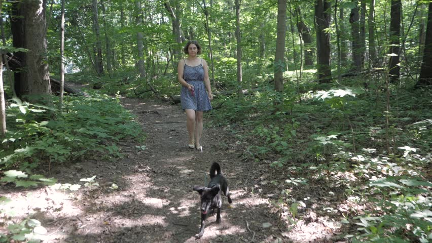 Dog walker with dogs enjoying in park. professional servise training in forest and city streets,