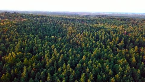 4k AERIAL: Flight over beautiful early autumnal forest. 3840x2160, 24fps.