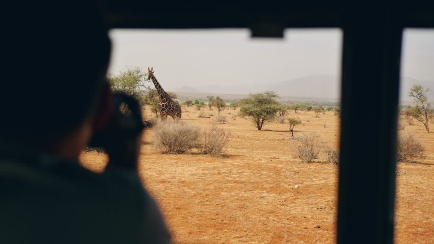 Photographer on safari photographs from the car of a wild giraffe who eats leaves on a bush in the African savannah with red earth, in the dry season, 4k | Shutterstock HD Video #1016079787