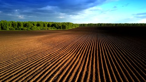 wonderful aerial motion over boron field orange rows without sproutings under bright sunset light