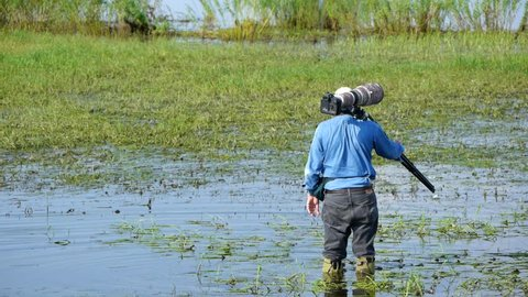 Wildlife photographer carrying heavy lens balancing while wading in water