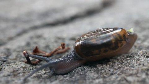 Snail climbing on rock