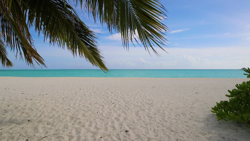 Walk along a palm tree with leaves hanging down, to vast sandy beach in Holiday Island Resort in Maldives. Palm leaves and a beach in Maldives | Shutterstock HD Video #1016762017