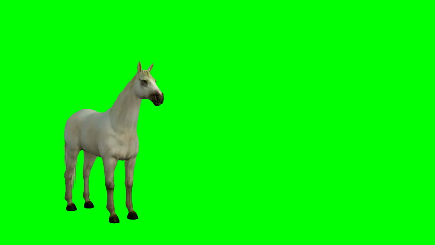 Arabian horse slowly walking on a green screen. #1016767537