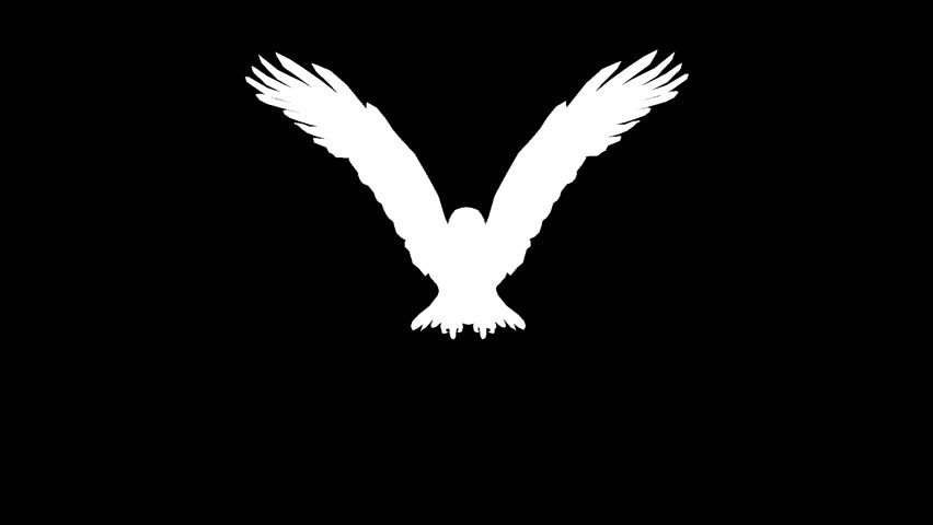 Silhouette of a flying eagle. Alpha channel. Alpha matte. FullHD.