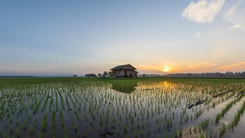 Time lapse of a sunrise view at an abandoned floating house in the middle of a secluded paddy field at Sungai Sireh, Selangor. Malaysia. Zoom out motion timelapse. Prores 1080p.