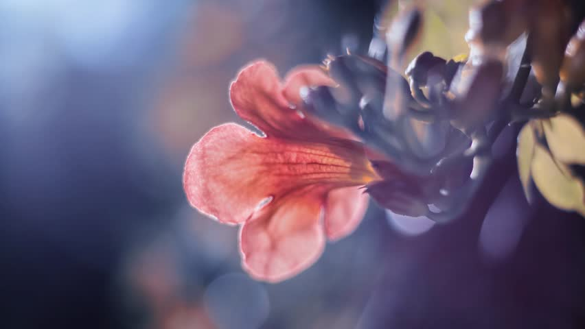 Flower explosion with particles. Natural and bright background. Flower is exploding with small particles. Magical animation.