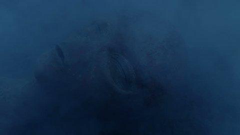 Burnt Alien In Smoking UFO Wreckage
