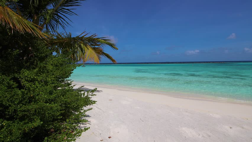 Beautiful sand beach in Paradise - Maldives. Waves, palms and blue sea. | Shutterstock HD Video #1017349957