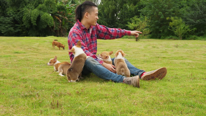 One happy young asian man playing with his Welsh Corgi puppies outdoor in the field, dogs playing around him, 4k slow motion #1017604357