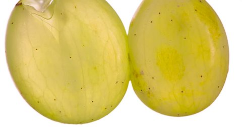 Squeeze the Two Halves of Green Grape. White Grapes are squeezed and crushed close-up on a bright white background, creating a juicy splash of pulp and juice. Shooting at 120 fps