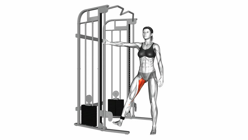 Cable Hip Adduction Exercise  Anatomy Stock Footage Video (100%  Royalty-free) 1017638047 | Shutterstock