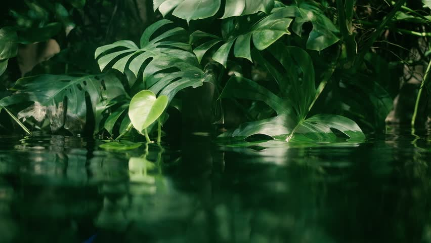 Calm relaxing background, tropical leaf submerged in exotic water, water waving slowly and reflecting plants, rainforest ecology concept | Shutterstock HD Video #1018006117