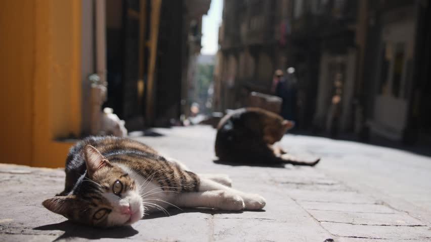 Stray cats at Istanbul Street. Turkey. 4K.