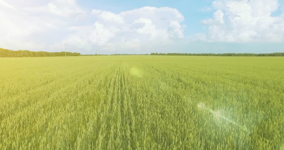 UHD 4K aerial view. Low flight over green and yellow wheat rural field at sunny summer day. Green trees and sun rays on horizon. Fast horizontal movement. | Shutterstock HD Video #1018195297