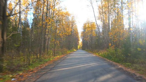 walk along the autumn forest road