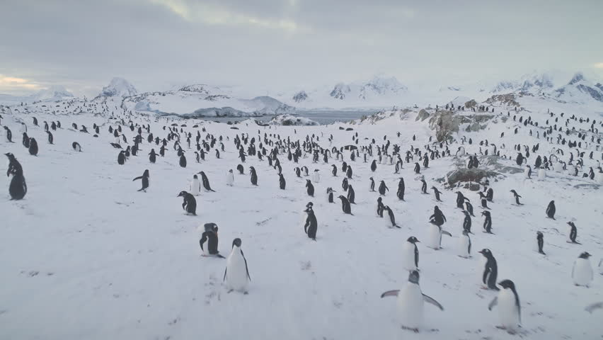 Aerial drone flight over penguins, seals. Antarctica wildlife. Overview shot of snow, ice covered land. Polar ocean water, mountains. Antarctic winter landscape. Ice cold. 4k footage. | Shutterstock HD Video #1018203247